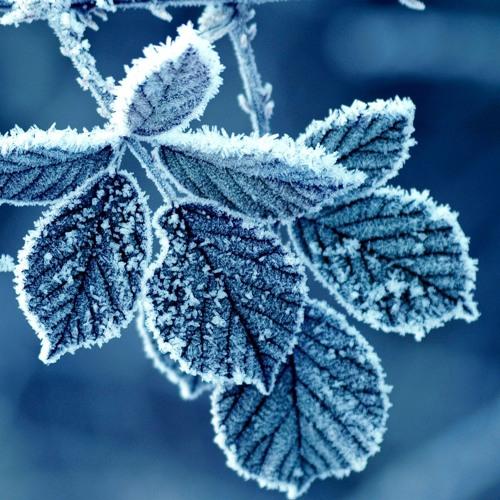 Largo from Winter- (quartet version)