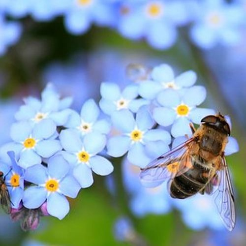Guided Meditation: Rest and Reflection with Biodiversity, offered by Shelley Ostroff