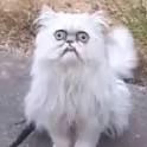 Weird Cat Photos 11