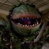 Podquisition 214: Little Shop Of Horrors Without The Plant