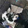 Dognapped #freejasper