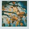 Polaroids #74
