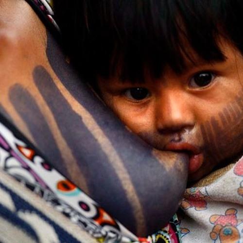A importância da influência indígena na alimentação do Brasil