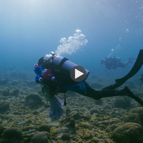 Spawning an Intervention: How to Raise Baby Corals