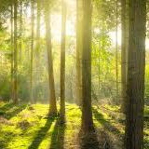 CT's environmental agenda for 2019