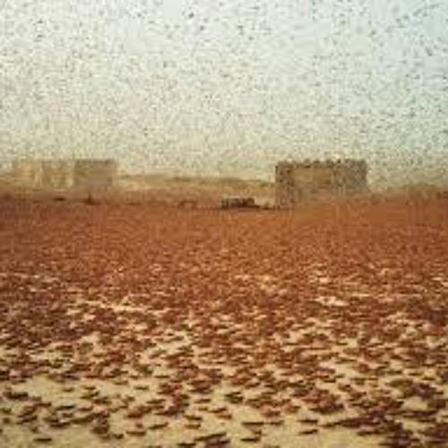Locusts in Makkah and the Universal Signs of Allah--Shaykh 'Ali Al-Wasifi