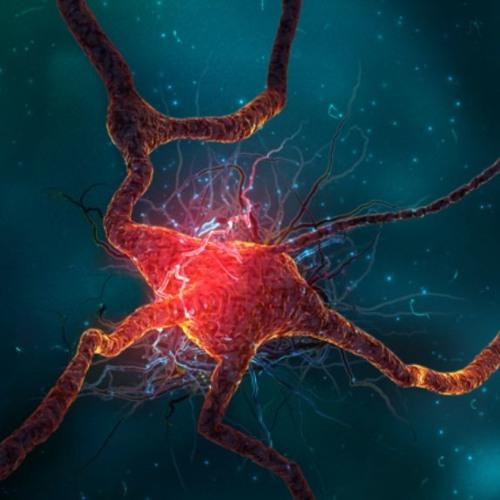 SpartanMind 41 - A Ciência Explica o que Acontece Com o Seu Cérebro Quando RECLAMA!