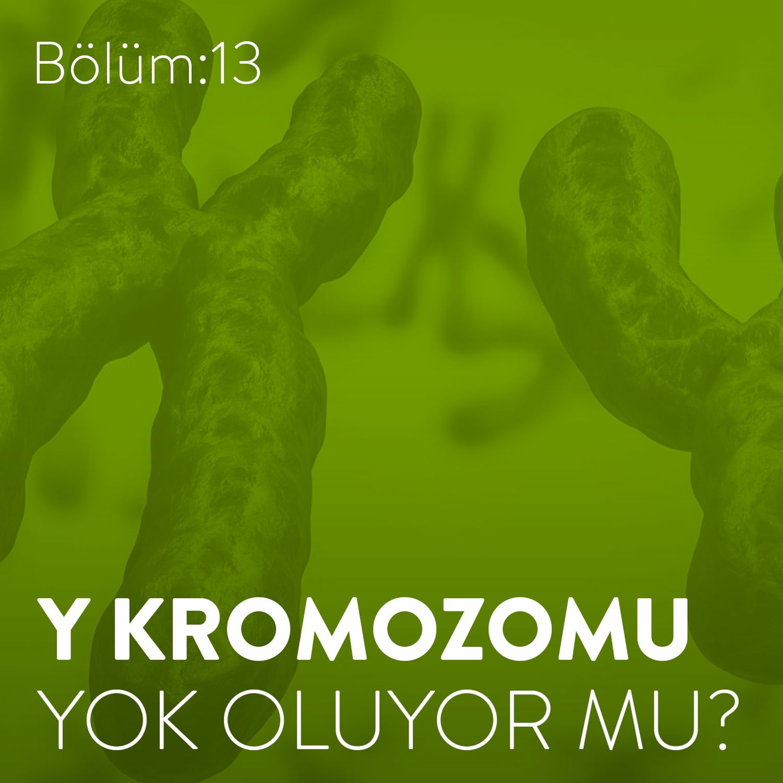 #13: Y Kromozomu Yok Oluyor Mu?