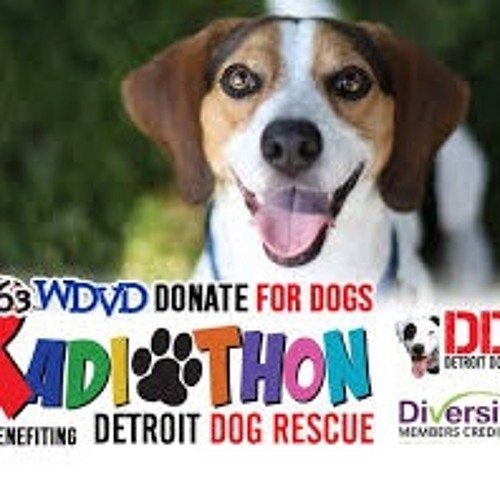 Kat Harrison Interview on 96.3 WDVD for Detroit Dog Rescue