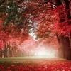 20. Beautiful Relaxing Music  Romantic Piano Music, Violin Music, Cello Music, Guitar Music ★74