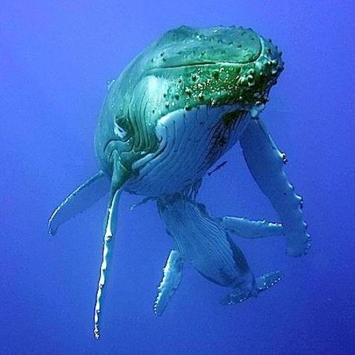 Whale Part 10 (1991)