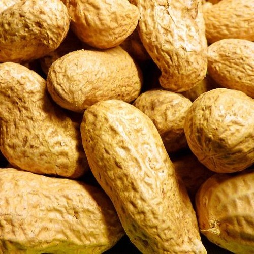 Health Matters:  Food Intolerance and Allergies (31 January 2019)