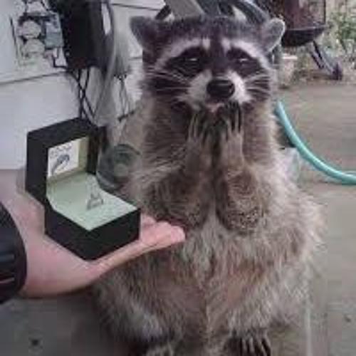 Raccoon GF