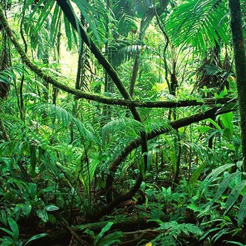 One Minute In The Jungle (sketch)