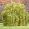 Evergreen (B. Streisand - P. Willams)