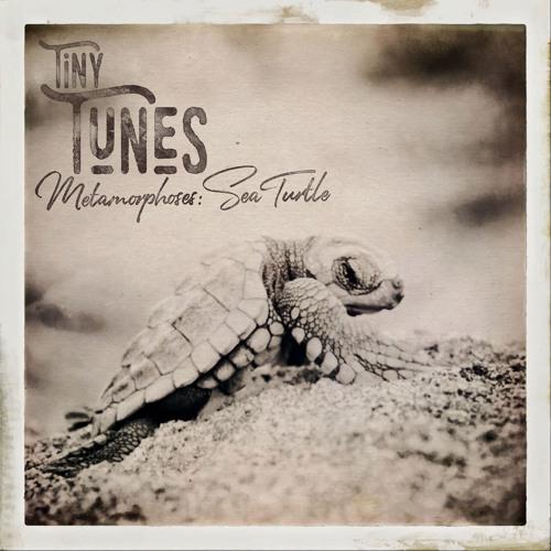 Tiny Tunes, Metamorphoses: Sea Turtle