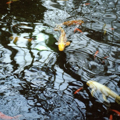 JASON LETKIEWICZ - The Reflecting Pool (ITLIntl03)