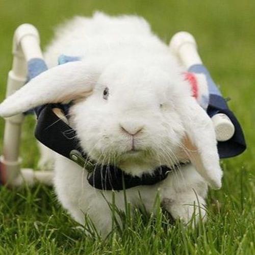 konijn op je neus is wit