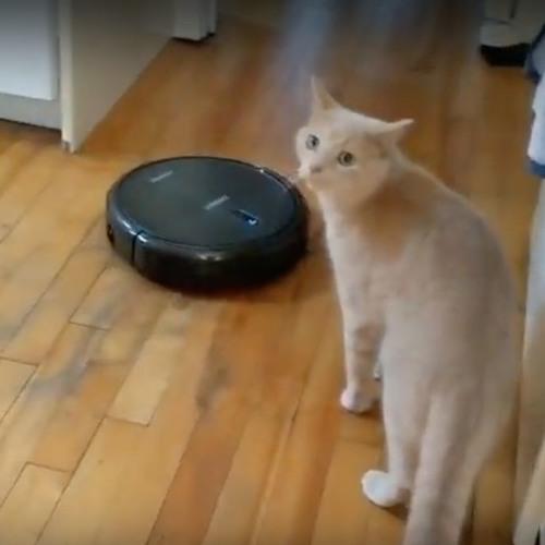 Gadget Guru - Ecovacs Smart Vacuum Robot