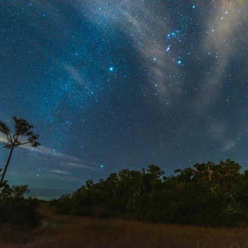 Everglades hammock after dark