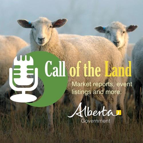 Margaret Oosterhof: Sheep shearing course
