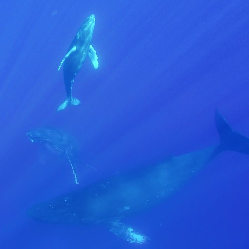 Whale Song 2