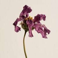 Perfume Genius - Die 4 You Acoustic Cover