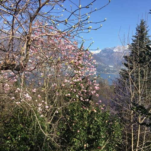 Dig It! Ticino Gardens (4 March 2019)