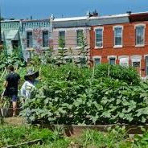 Urban Gardens in Bridgeport and New Haven