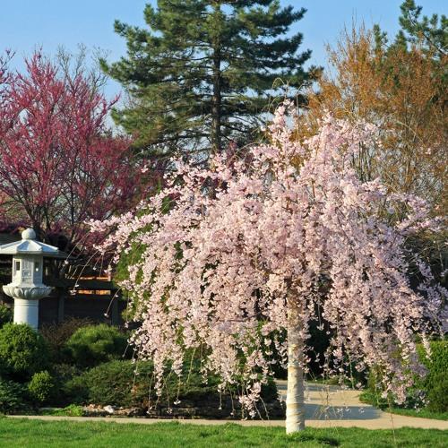 Glances Through An Arboretum