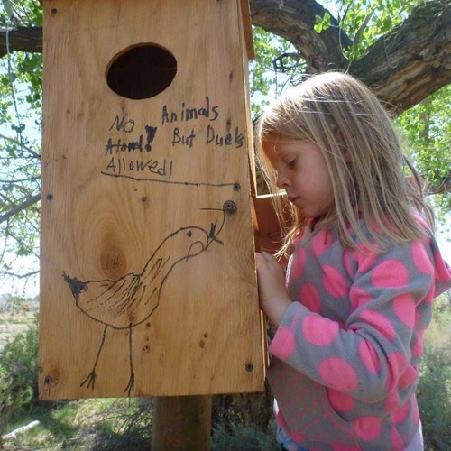 Wood Duck and Duck Banding Projects