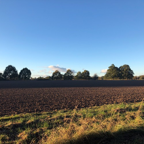 A field In England (stereo mix extract)