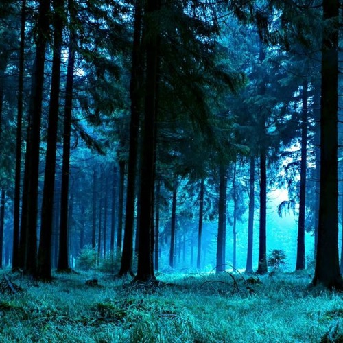 Forest Night Nature Sounds for Sleeping or Studying (75 Minutes) by