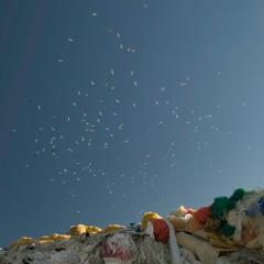 Landfill bird colonies, late winter 2019