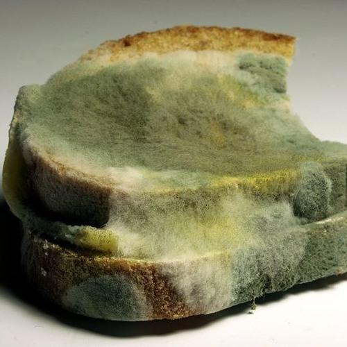 Pan verde (En Venta, For Sale) (Prod. Dieguelz & Said Menay)