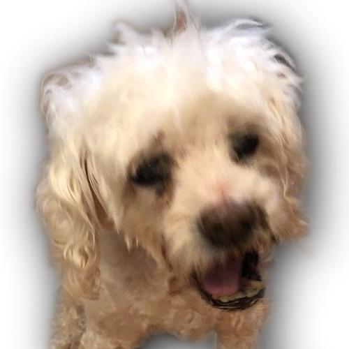 Meet Buddy Keemstar's Old Dog
