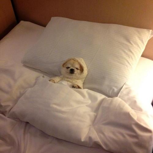 "131 Sarah Farina ""Sleep Tight Pupper""( ᵔ ᴥ ᵔ ) Ambient Mix"