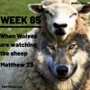3-15 - Week 85 - When Wolves are watching the sheep - Matthew 23