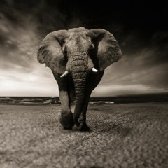 Journey of Attachment: Avoiding the Elephant in the Room