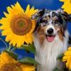 Vampire Weekend - Sunflower (Post Malone & Swae Lee Cover) - BBCR1 (via teamvampireweekend.com)