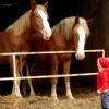 Download معلومات عن الحصان للأطفال Mp3