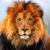 Circle Of Life (Elton John) Lion King Disney piano cover by Manny Sousa