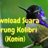 Suara Burung Kolibri Pikat
