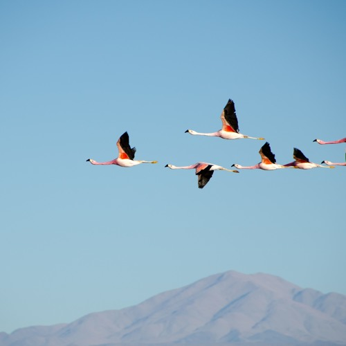 II. (Migratory Birds) from AEROBATICS