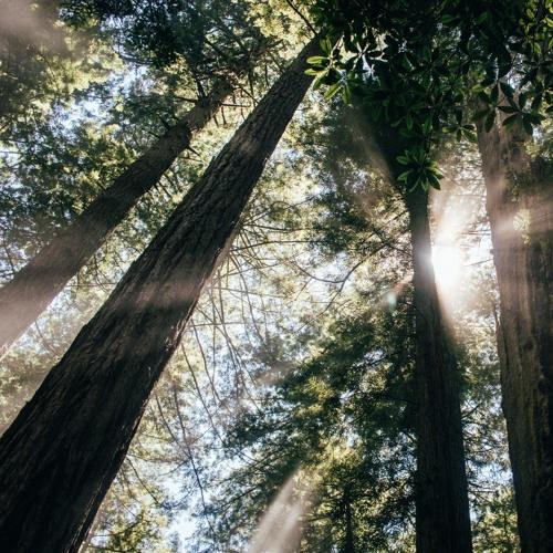 K'vsh - chu [Redwoods] III.Yaa-mee' [Sky]
