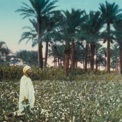 Making Environmental Subjects on the Egyptian Nile | Jennifer Derr