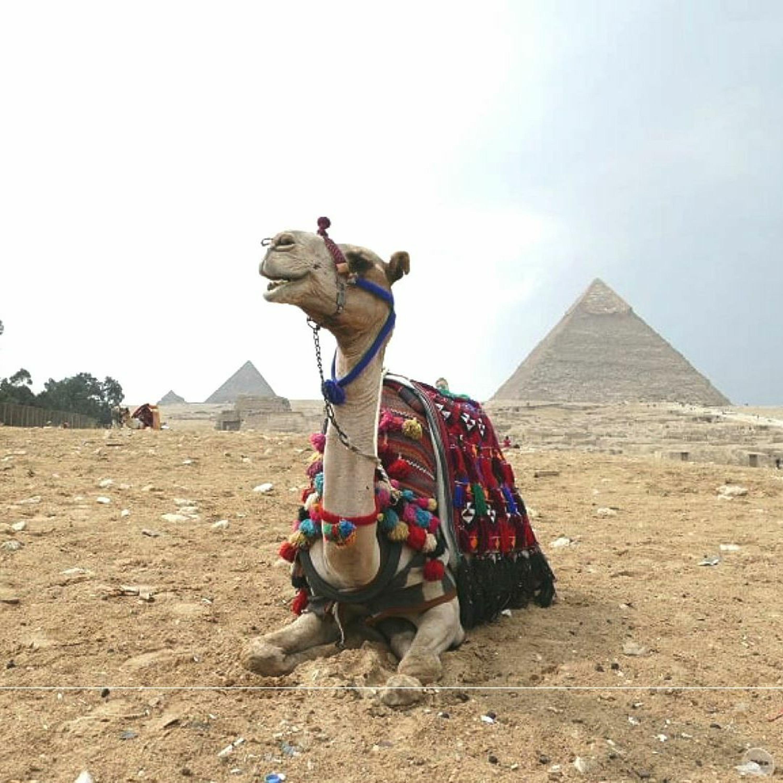 BUBO cestovanie: Egypt