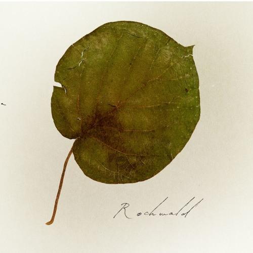 Rochwald - Žuka