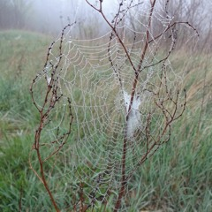 The fog, the spider and the bluethroat