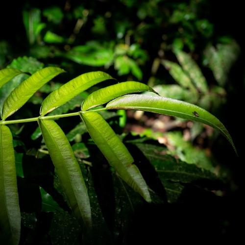 Amazon basin rainforest - Calm afternoon